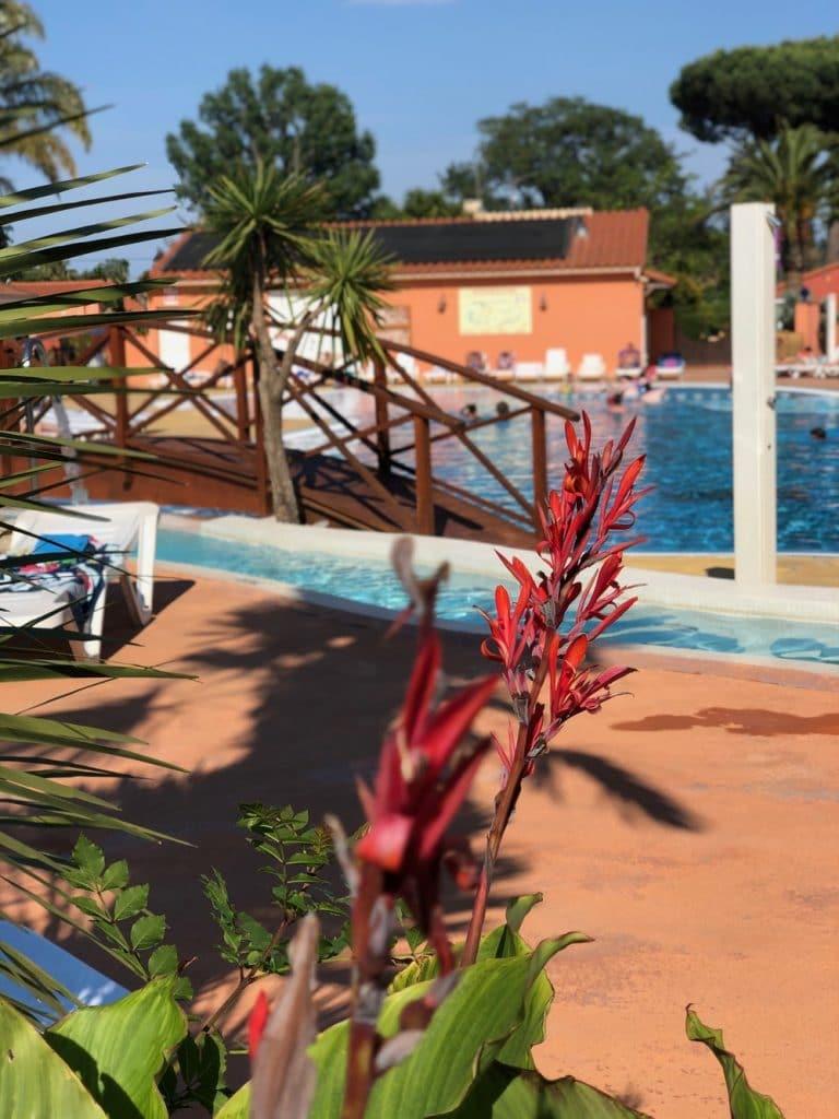 Fleur piscine camping