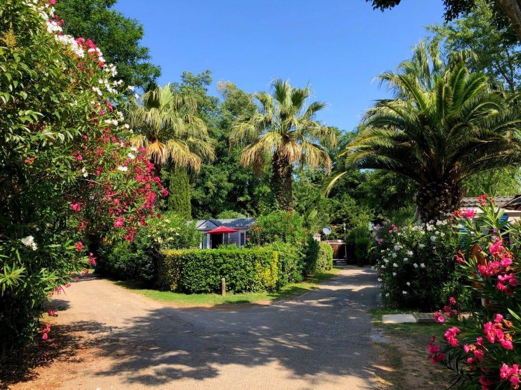 Parc végétal luxuriant